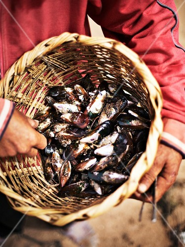 A man holding a basket of fresh mussels (Morocco)