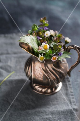A bunch of herbs in a silver jug (loveage, daisies, catmint)