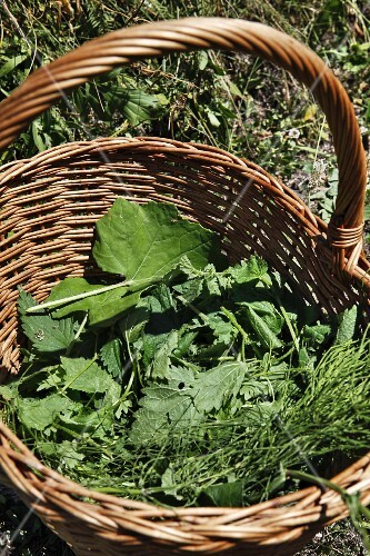 Various fresh herbs in a basket