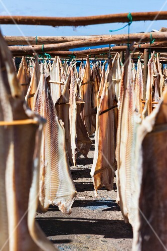 Stockfish hanging up to dry (Portugal)