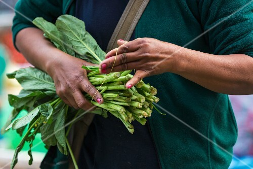 Kale being tied in a bunch (Vientiane, Laos)