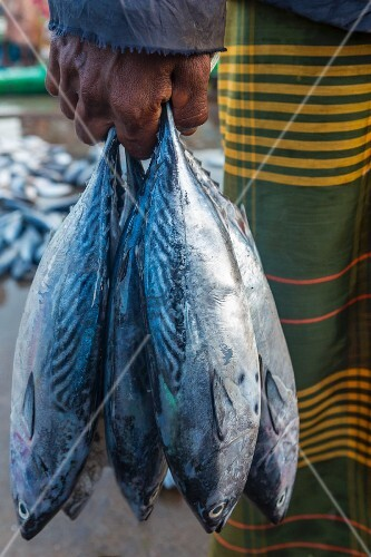 A man carrying small tuna fish at a fish market in Sri Lanka