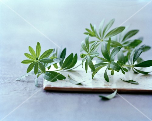 Fresh woodruff on a board