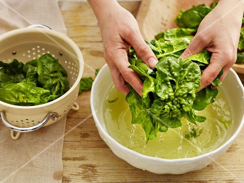 Spinach being washed