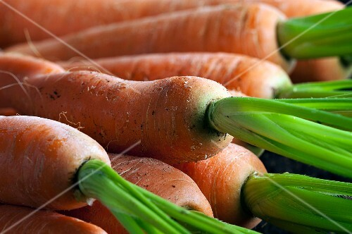 Fresh carrots (close-up)