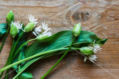 Wild garlic with flowers on a wooden table