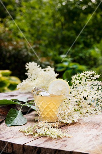 A glass of fresh elderflower syrup with flowers on a wooden table in a garden