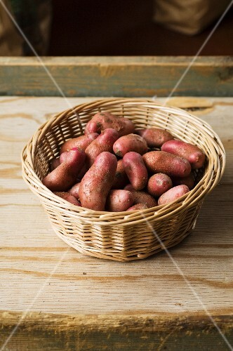 A basket of red skinned Cherie potatoes
