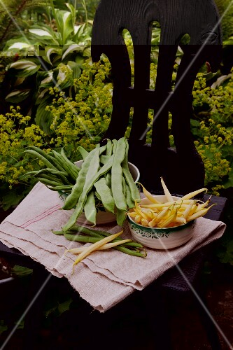 Bush beans, wax beans and green beans