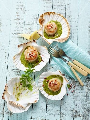 Scallops with green garlic and chilli sauce