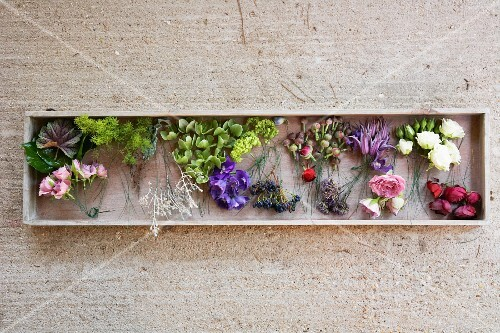 Various flowers in a box on a concrete surface
