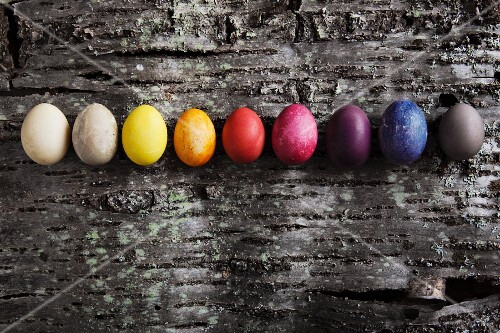 Easter eggs dyed using various materials on piece of cherry bark