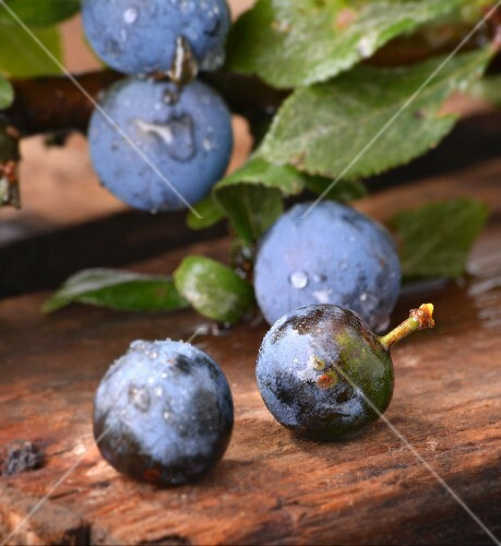Freshly washed sloes on a wooden crate