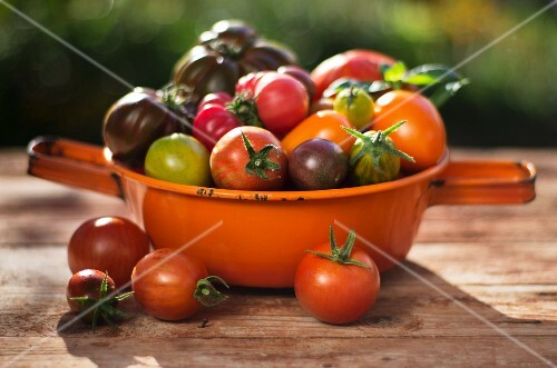 Various types of tomatoes in an orange, enamel sieve on a wooden surface