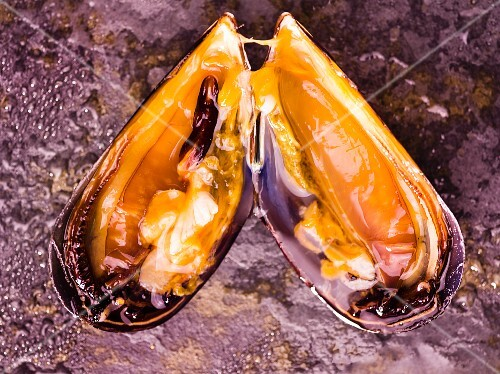 A fresh, opened mussel (seen from above)