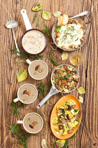 Various porcini mushroom dishes: soup, sauce, tortellini, bake with potatoes and porcini mushrooms with mozzarella