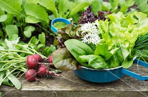 A spring harvest from a raised bed featuring radishes, lettuce and herbs
