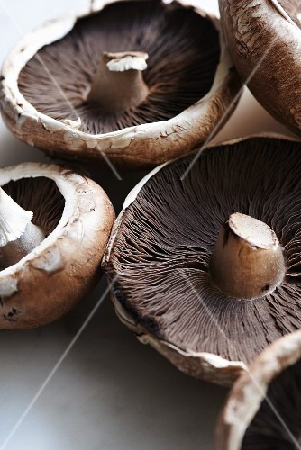 Mushrooms and Portobello mushrooms (close-up)