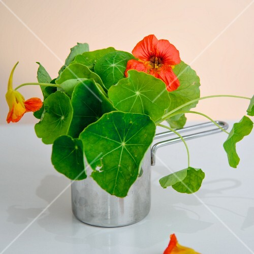 Fresh, flowering nasturtiums in a saucepan