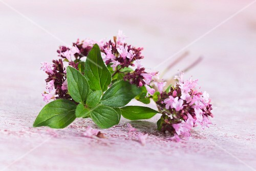 Oregano leaves and flowers