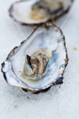 Fresh oyster in its shell