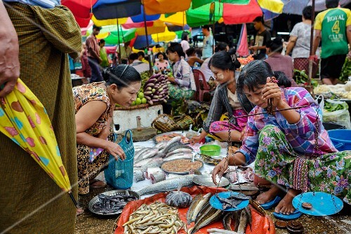 A fish seller at a market (Yangon, Myanmar)