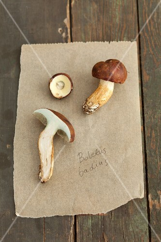 Bay boletes on a piece of paper