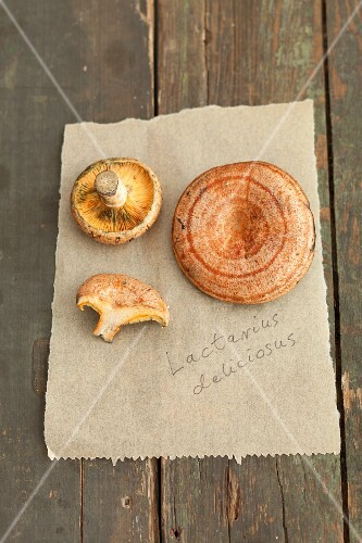 Red pine mushrooms on a piece of paper