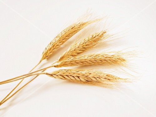 Four ears of wheat