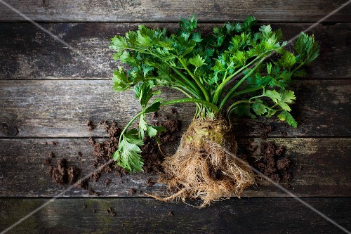Celeriac with roots and leaves on a wooden surface with soil