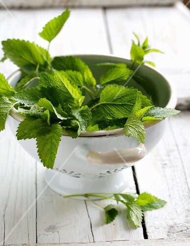 Fresh lemon balm in a colander