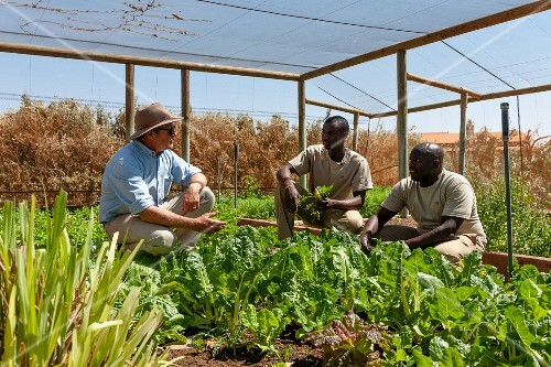 Wolwedans, NamibRand Nature Reserve, Namibia, Africa – lettuce and herbs growing in a greenhouse at the supply station 'Base Camp' – Mr. Brückner and workers