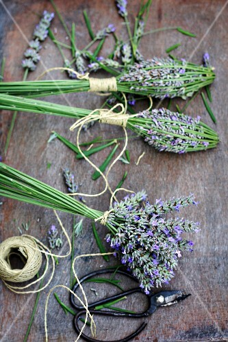 Tying bunches of lavender