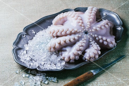 Raw octopus on ice
