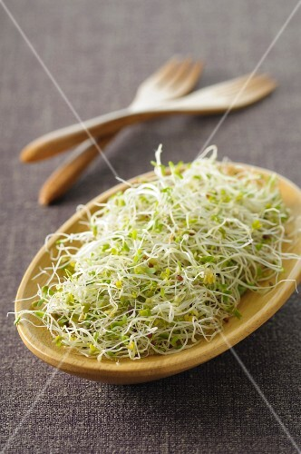 Fresh bean sprouts in a wooden bowl