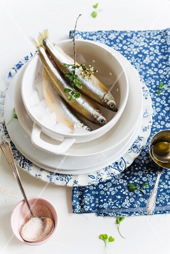 Fresh smelts on ice in a cup