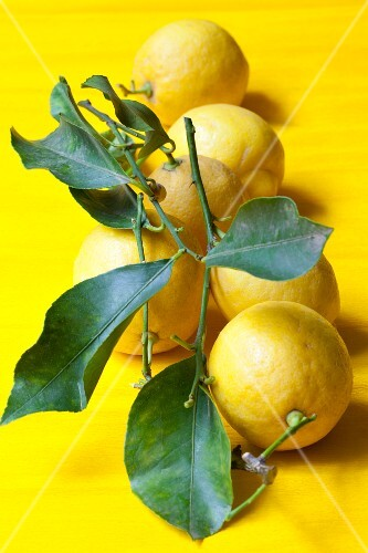 Lemons with stems and leaves
