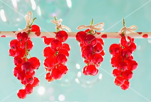 Redcurrants hanging on a straw