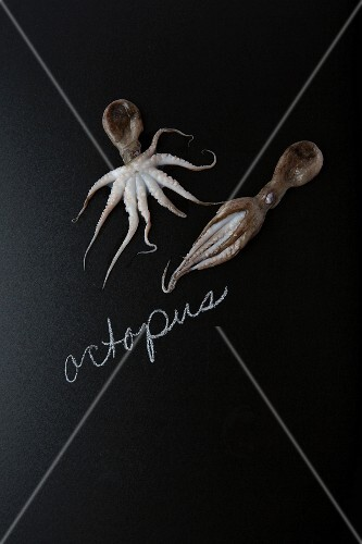 Octopus on a slate surface with a label