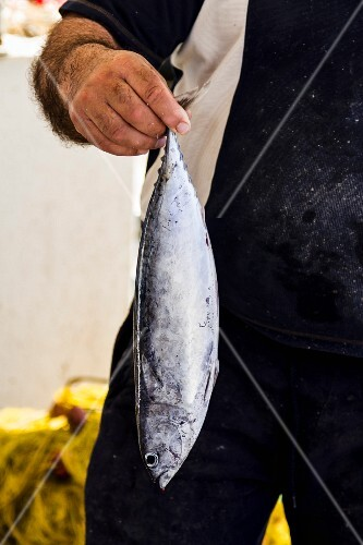 A man holding a freshly caught mackerel