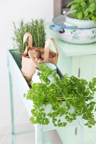 Fresh kitchen herbs in a pale green vintage plant trough