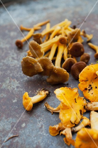 Trumpet chantrelles and yellow chanterelles