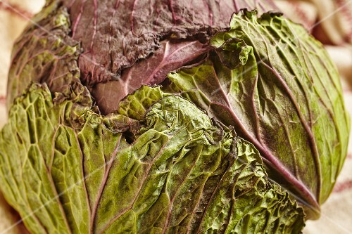 A whole multicoloured cabbage from a farm in Vermont, USA
