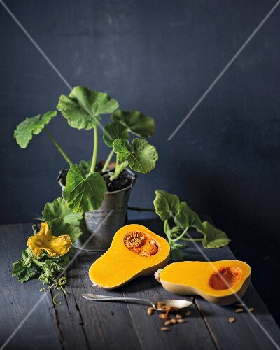 Pumpkin plants in a bucket and a halved butternut squash