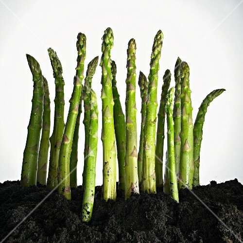 Green asparagus spears in the ground