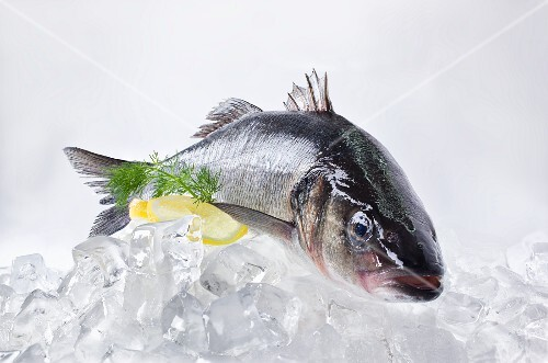 A fresh catfish on ice