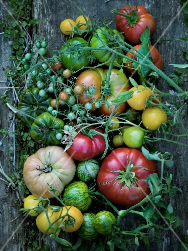 Various types of tomatoes on a wooden surface (seen from above)