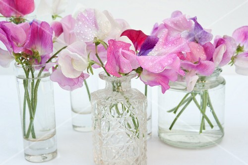 Sweet peas in shades of pink in various glass vases
