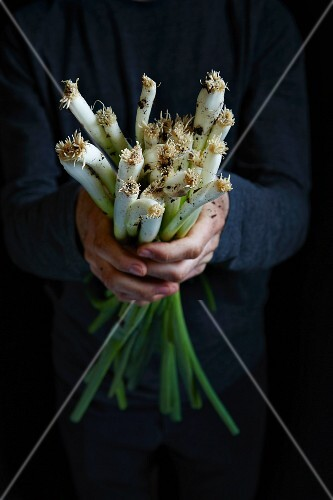 Hands holding a bundle of spring onions