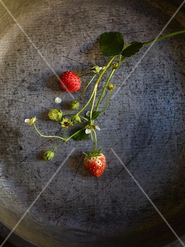 Strawberries on stems in a metal dish